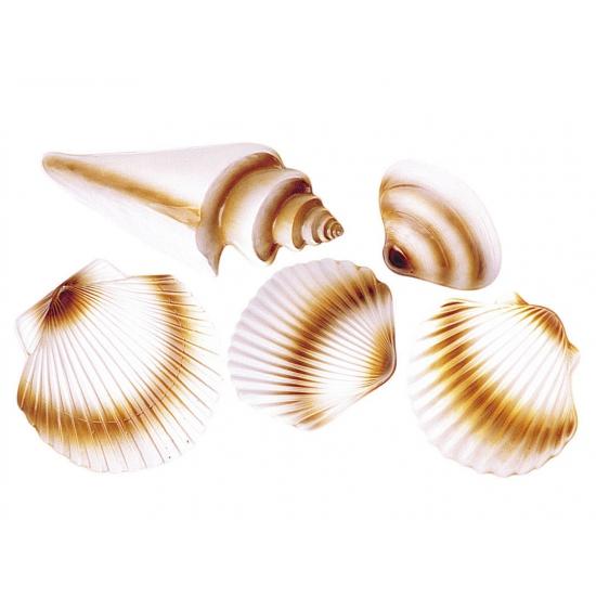 Strand schelpen decoratie